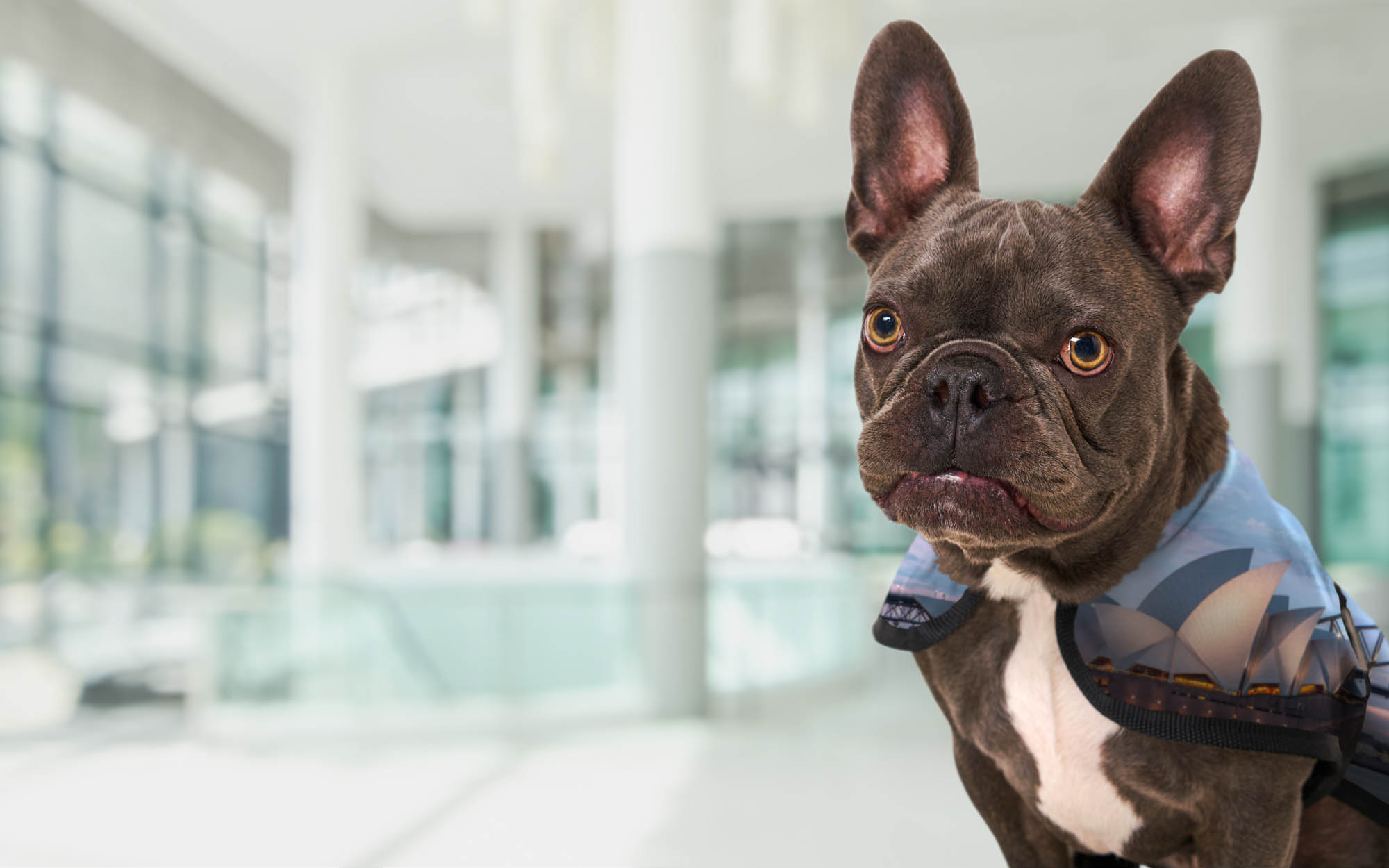 K2 Melbourne dog